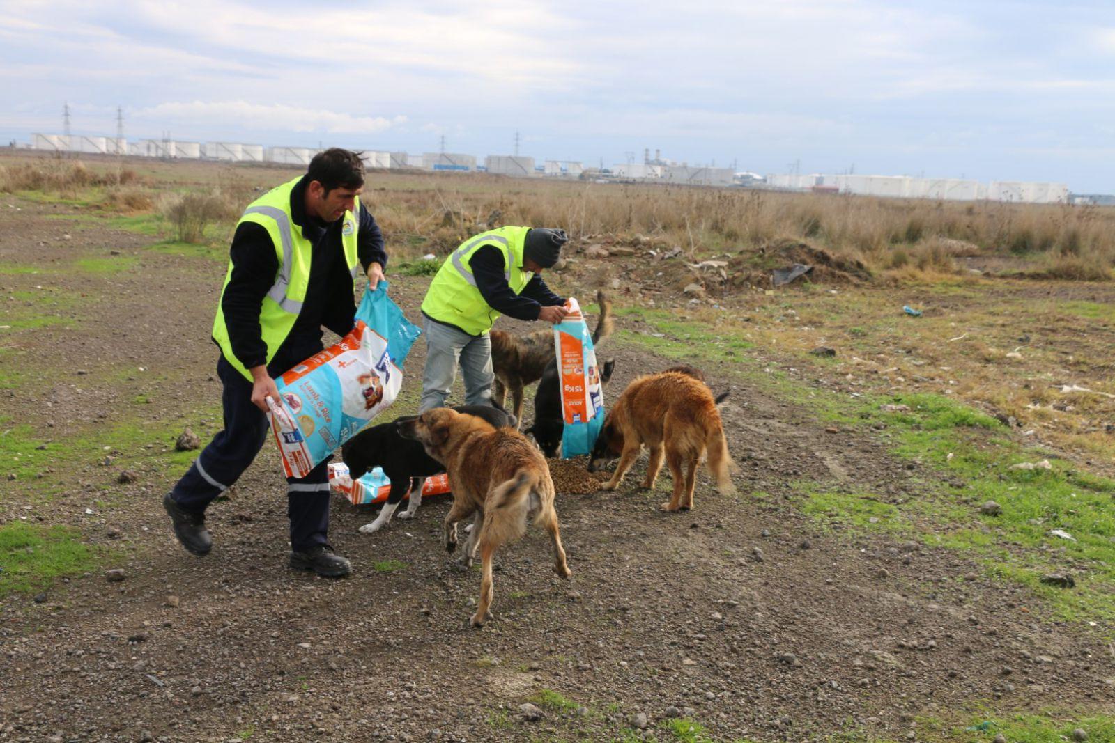 Marmara Ereğlisi Belediyesi Soğuk Havada Can Dostlarımızı Unutmadı