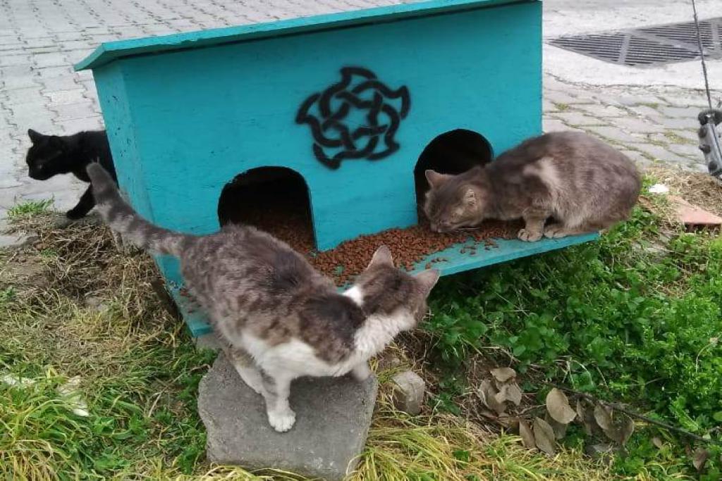 Süleyman Paşa Belediyesi sokak hayvanlarına sahip çıkıyor